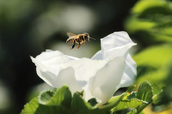 Bee Doing Bee Stuff