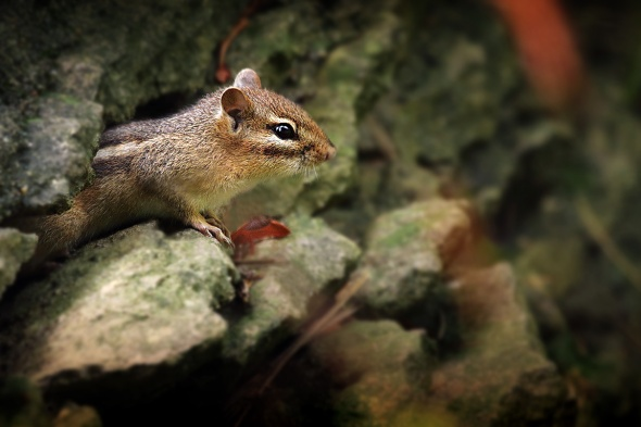 Critter in the Rocks